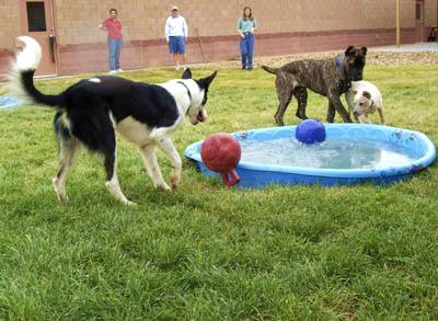 Dogs enjoy waterplay during Doggie Day Care session.